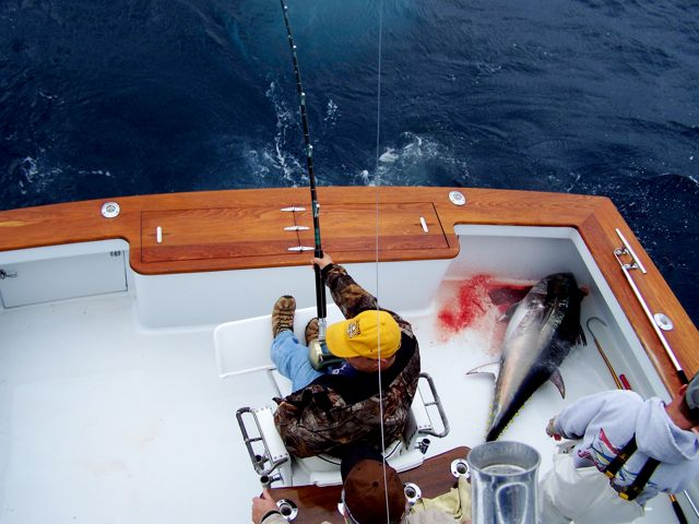 Hot Bluefin Fishing!